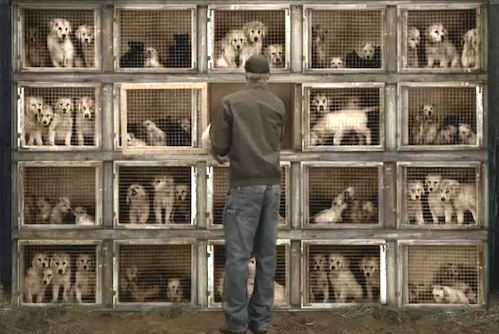 'Puppy mill' bill signed into law by Gov. Cuomo ...